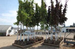 "21"" Bag Trees staged and ready to be loaded"