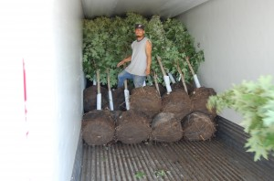 "21"" Bag Trees loaded into Semi"