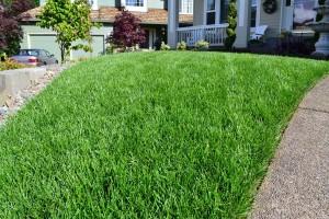 RTF Lawn