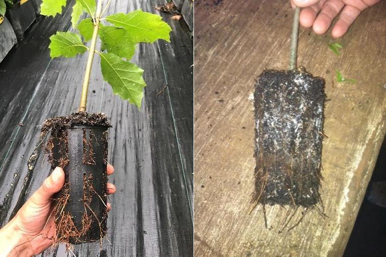 buy trees like this small sapling