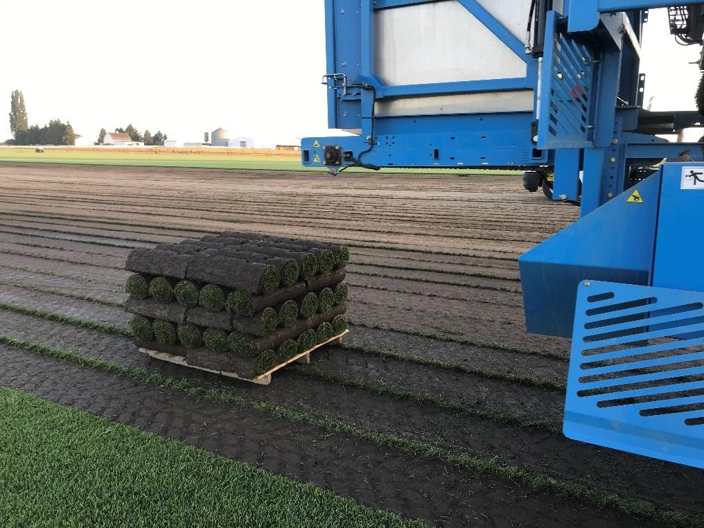 Sod supplier harvesting sod gently with a great sod harvester