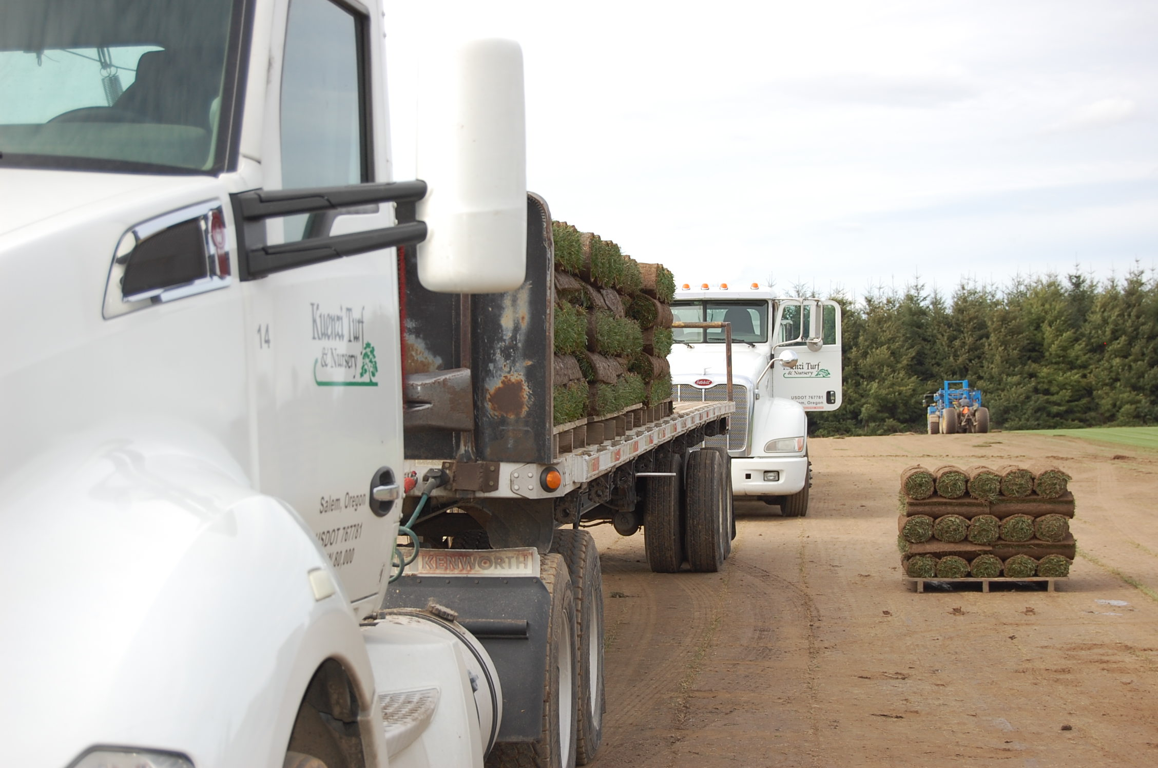 rolls of sod being loaded onto a truck