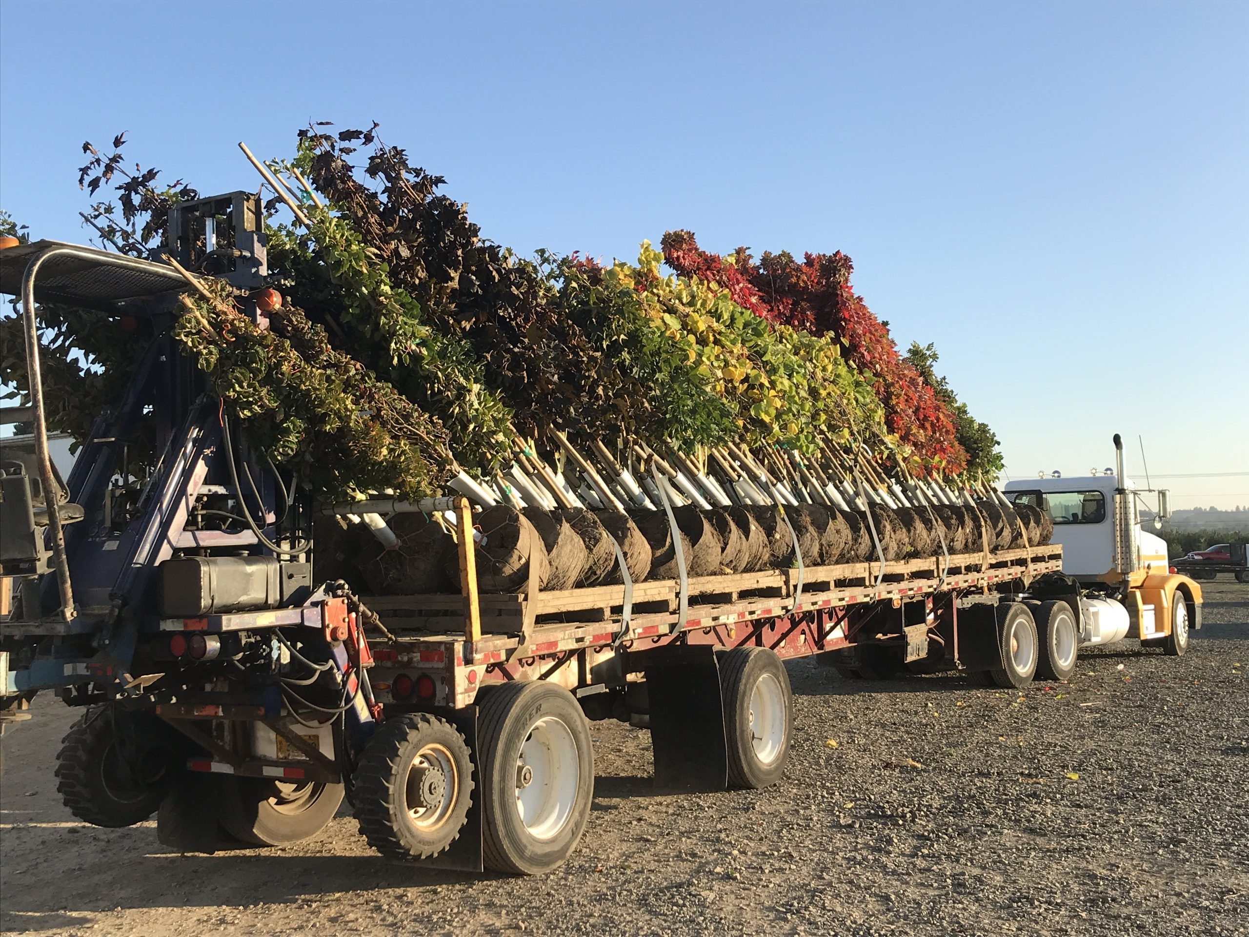 photo of sod and trees loaded onto a large truck bed